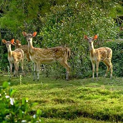 Temple & Wildlife Odisha Tour